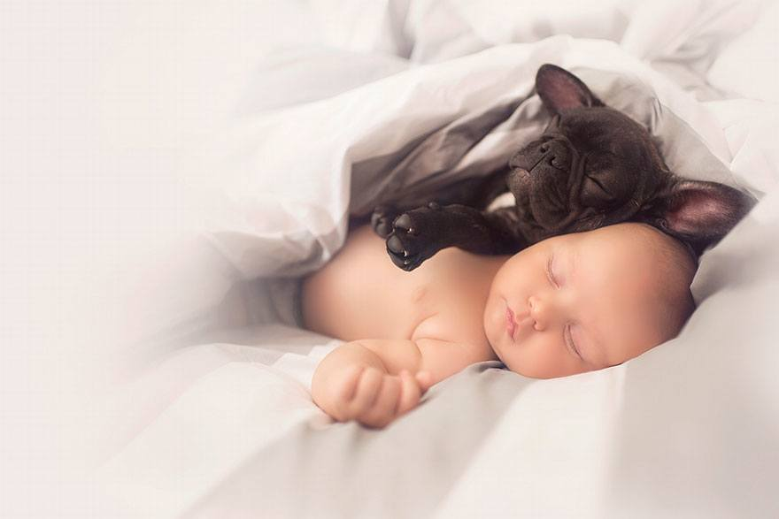 baby-dog-friendship-french-bulldog-ivette-ivens-2