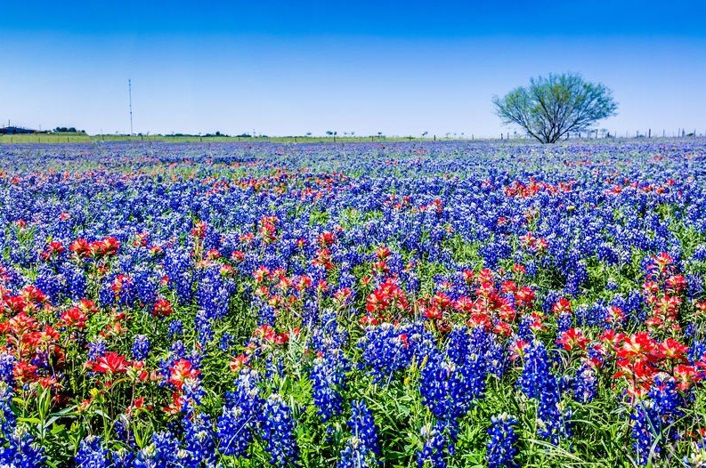 Fun things to do in texas this spring things you need to do in texas this spring mightylinksfo
