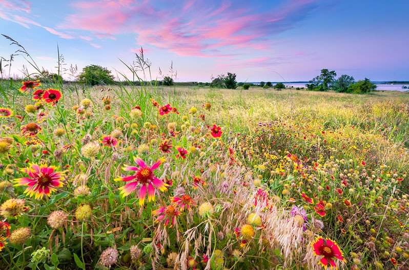 Can You Name All These Texas Wildflowers Quiz