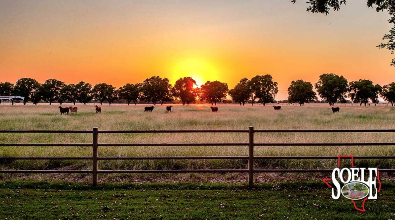 Image via Texas Best Ranches