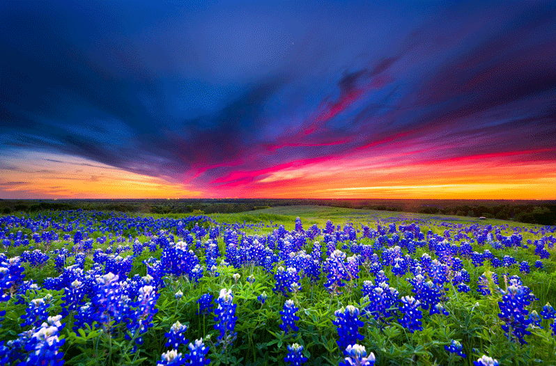 The 2019 Texas Wildflower Season Is the Best One in 10 Years